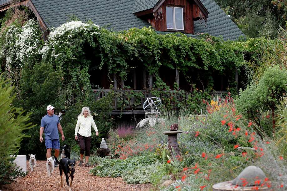 Kate Frey and husband Ben Frey stroll in their verdant garden, which emphasizes sustainable, organic and habitat features. Photo: Brant Ward / The Chronicle / ONLINE_YES