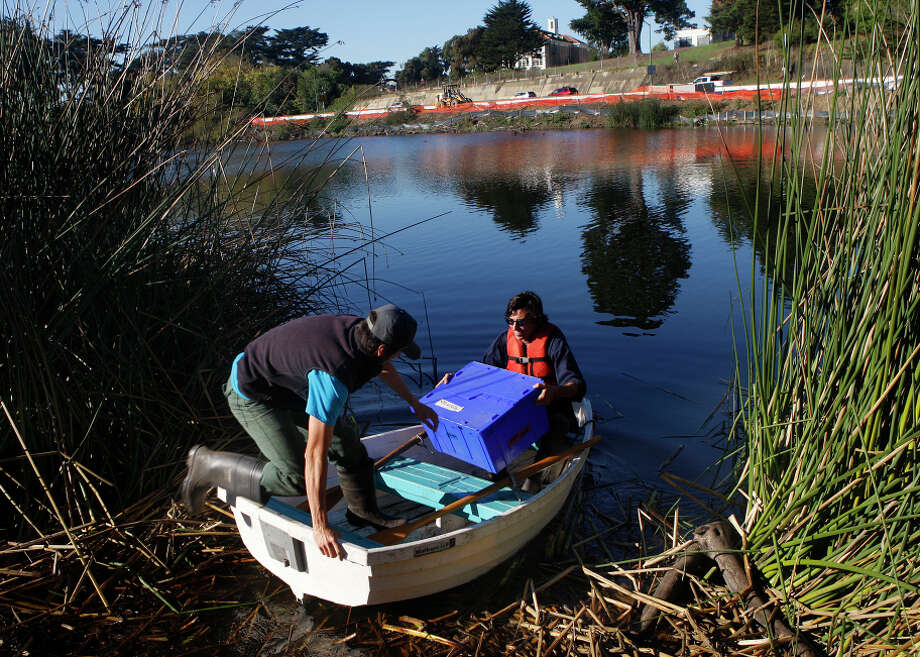 Interns Dave DuBose (left) and Jonathan Young head out into Mountain Lake last week to pull up nets to catch invasive fish. Photo: Liz Hafalia / The Chronicle / ONLINE_YES