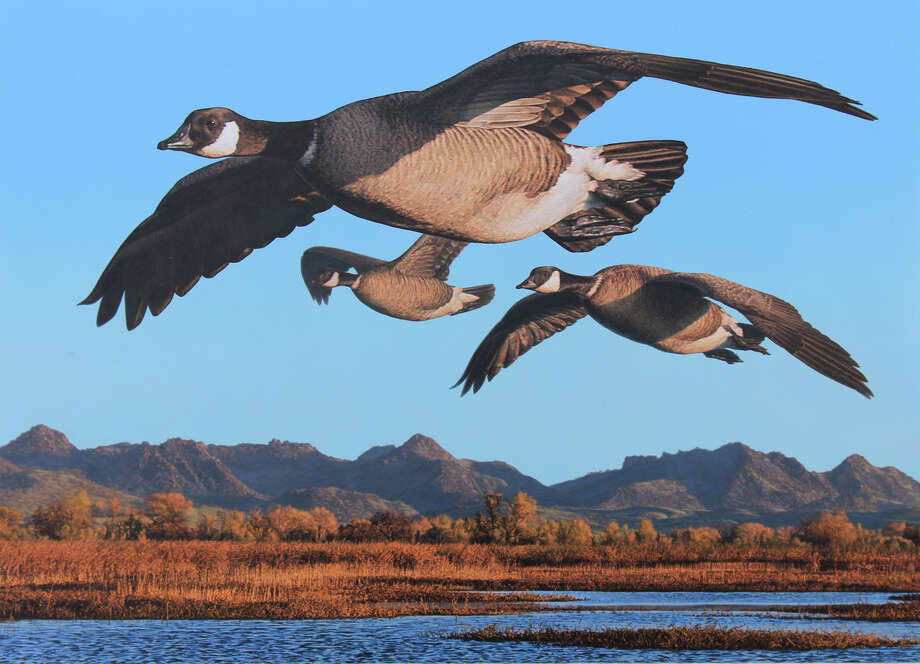 Bob Steiner of San Francisco painted this scene of Aleutian Canada geese in a marsh at the foot of the Sutter Buttes in the Sacramento Valley -- it won first place for the California Duck Stamp in 2012 Photo: Courtesy Www.steinerprint.com / Courtesy Www.steinerprint.com / ONLINE_YES