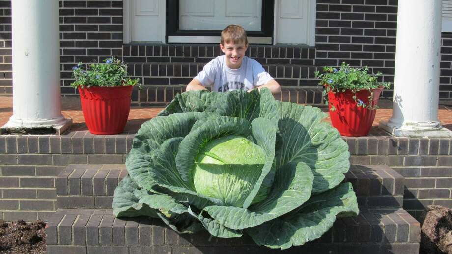 Alabama winner 2013: Jackson Brown Photo: Bonnie Plants