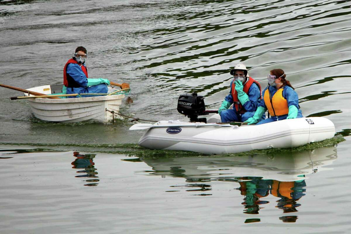 Workers search for dead fish during a fish eradication operation at Mountain Lake in the Presidio on Nov. 12, 2014, in San Francisco. The Presidio Trust contracted with Fish Control Solutions to use the rotenone-based chemical to remove invasive species that have dogged the lake for years.