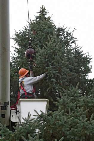 State Office of General Services worker Eric Lounsberry hooks the top of the tree Wednesday morning Nov. 12, 2014, in preparation for its removal from 834 Woodland Avenue in Schenectady, N.Y.  The tree will become the state Christmas tree and reside on the Empire State Plaza. The official lighting will be at 5:15 p.m. Dec. 7.     (Skip Dickstein/Times Union) Photo: SKIP DICKSTEIN / 00029428A