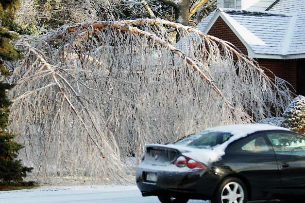 .JAMES GOOLSBY/TIMES UNION-Dec. 12, 2008-Ice covered trees limbs bend but don't break. At home  on Timberland Dr. in Colonie. Photo: JAMES GOOLSBY, TIMES UNION / 00001665C