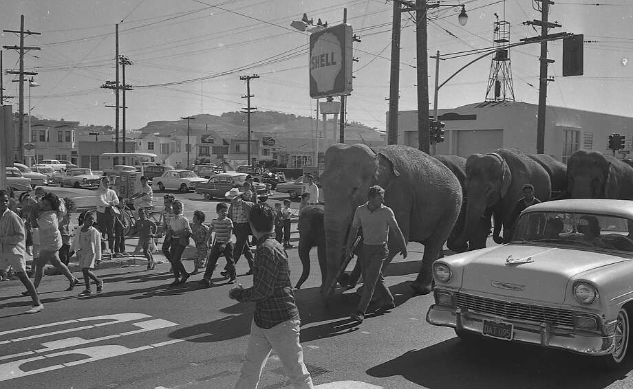 Here's a sight you'll never see in San Francisco again: Elephants from the circus marching down the street. The Ringling Bros. and Barnum & Bailey circus came to San Francisco in Sept. 1963, and their menagerie of animals went on parade through town. Photo: Peter Breinig, The Chronicle