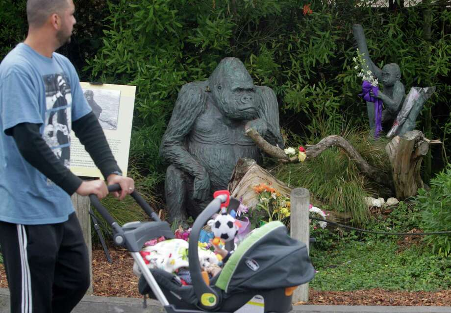 A visitor strolls past a memorial arranged for the 16-month-old gorilla Kabibe at the San Francisco Zoo on Nov. 13, 2014, after the gorilla died in an accident Nov. 7. Photo: Paul Chinn / The Chronicle / ONLINE_YES