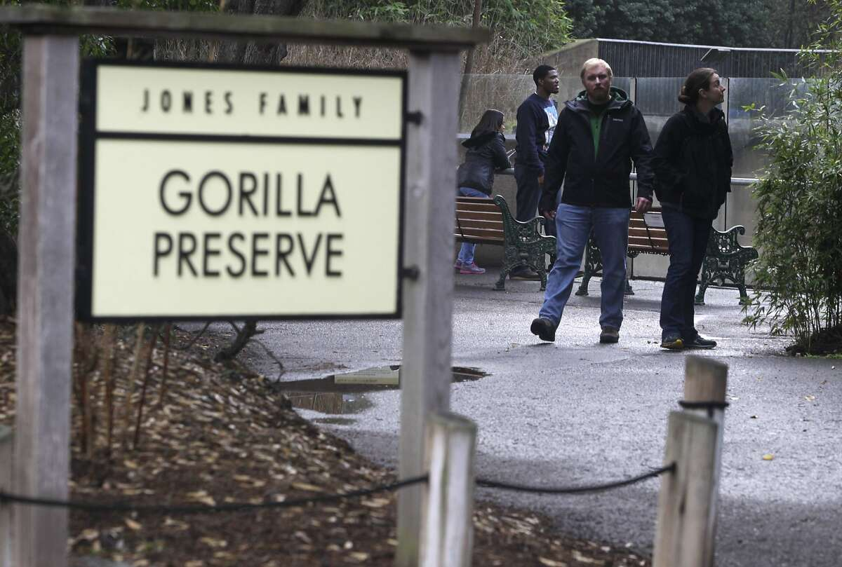 Sascha Matzke (left) and Anastasia Josselyn visit the gorilla preserve at the San Francisco Zoo in San Francisco, Calif. on Thursday, Nov. 13, 2014. Young gorilla Kabibe died in a tragic accident last Friday night.