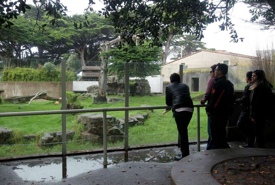 Visitors stop at the gorilla enclosure at the San Francisco Zoo in San Francisco, Calif. on Thursday, Nov. 13, 2014. Young gorilla Kabibe died in a tragic accident last Friday night. Photo: Paul Chinn / The Chronicle / ONLINE_YES