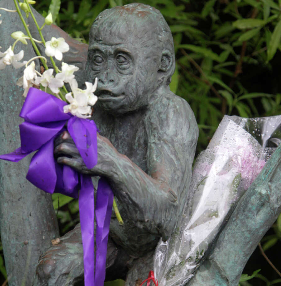 Mourners have left flowers at the zoo's gorilla preserve. 16-month-old gorilla Kabibe died in a tragic accident last Friday night. Photo: Paul Chinn / The Chronicle / ONLINE_YES