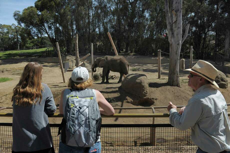 People gaze at Osh, a male African elephant at the Oakland Zoo on August 12, 2014 in Oakland, CA. The zoo celebrated world elephant day with a series of exhibits focused on the plight of African elephants with signed petitions and buttons advocating for outlawing the sale of ivory in California Photo: Craig Hudson / The Chronicle / ONLINE_YES