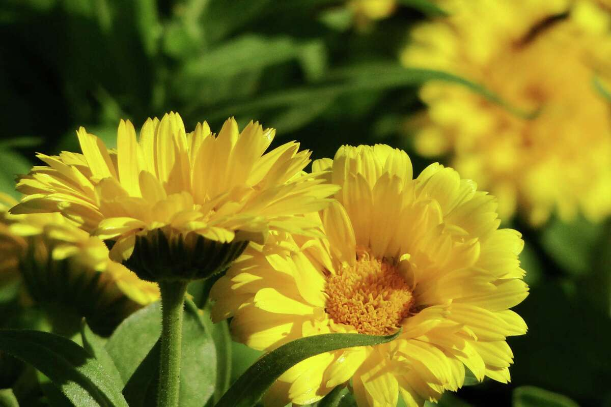 Make space for fall flowers expressnews make space for fall flowers mightylinksfo