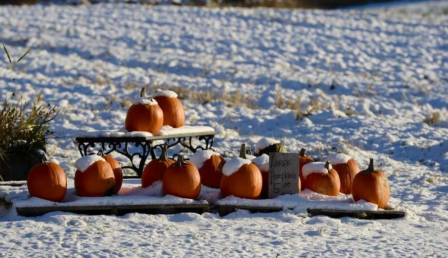 There was more than frost on the pumpkin Friday, Nov. 14, 2014, after overnight snow Friday dropped a coat of power on the Capital Region. It was the first measurable snow amount of snow to hit the region this season. (Skip Dickstein / Times Union)