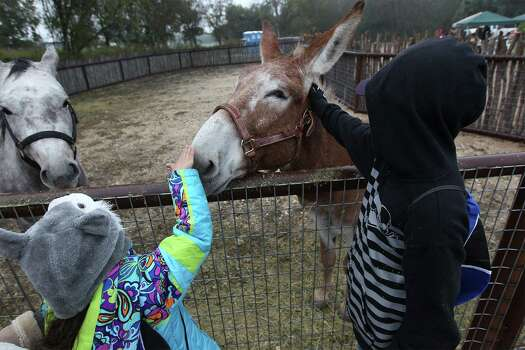 Charlotte DeLira (left) and her brother Nicholas pet a donkey named Goober at Farm Day at Mission San Juan on Saturday, Nov. 15, 2014. Farm Day featured various activities for guests to learn about how agriculture at the mission took root. Docents and National Park Service personnel showed various aspects of life at the mission that involved farming, raising animals and the development of an irrigation system. One of the highlights was a tour of the working acequia that is currently used to irrigate land around the mission as officials hope to grow and harvest crops on the land. Photo: Kin Man Hui, San Antonio Express-News / ©2014 San Antonio Express-News