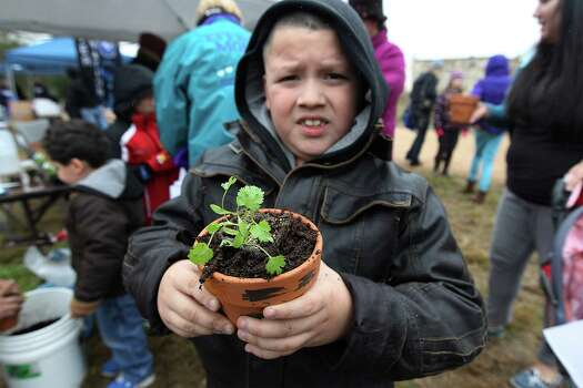 John Michael Cantu, 8, shows off his recently potted cilantro plant at Farm Day at Mission San Juan on Saturday, Nov. 15, 2014. Farm Day featured various activities for guests to learn about how agriculture at the mission took root. Docents and National Park Service personnel showed various aspects of life at the mission that involved farming, raising animals and the development of an irrigation system. One of the highlights was a tour of the working acequia that is currently used to irrigate land around the mission as officials hope to grow and harvest crops on the land. Photo: Kin Man Hui, San Antonio Express-News / ©2014 San Antonio Express-News