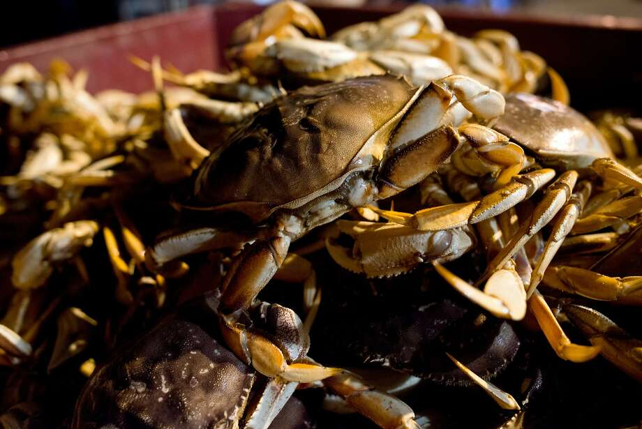 A bin full of fresh dungeness crab is seen before being cooked and sold to seafood distributors at Pezzolo Seafood on Pier 45 in San Francisco, California, on November 16, 2014. Photo: Alvin Jornada, The Chronicle
