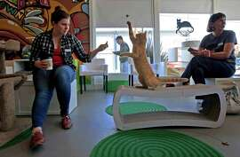 Jennifer Coryell of Oakland plays with a cat at the newly established Cat Town Cafe in Oakland.