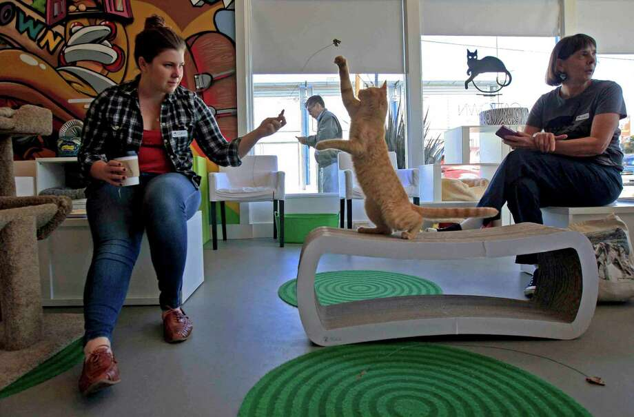 Jennifer Coryell of Oakland plays with a cat at the newly established Cat Town Cafe in Oakland. Photo: Jessica Christian / The Chronicle / ONLINE_YES