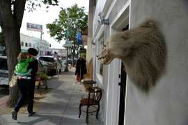 A stuffed baboon head hangs outside Found on Piedmont Avenue in Oakland.
