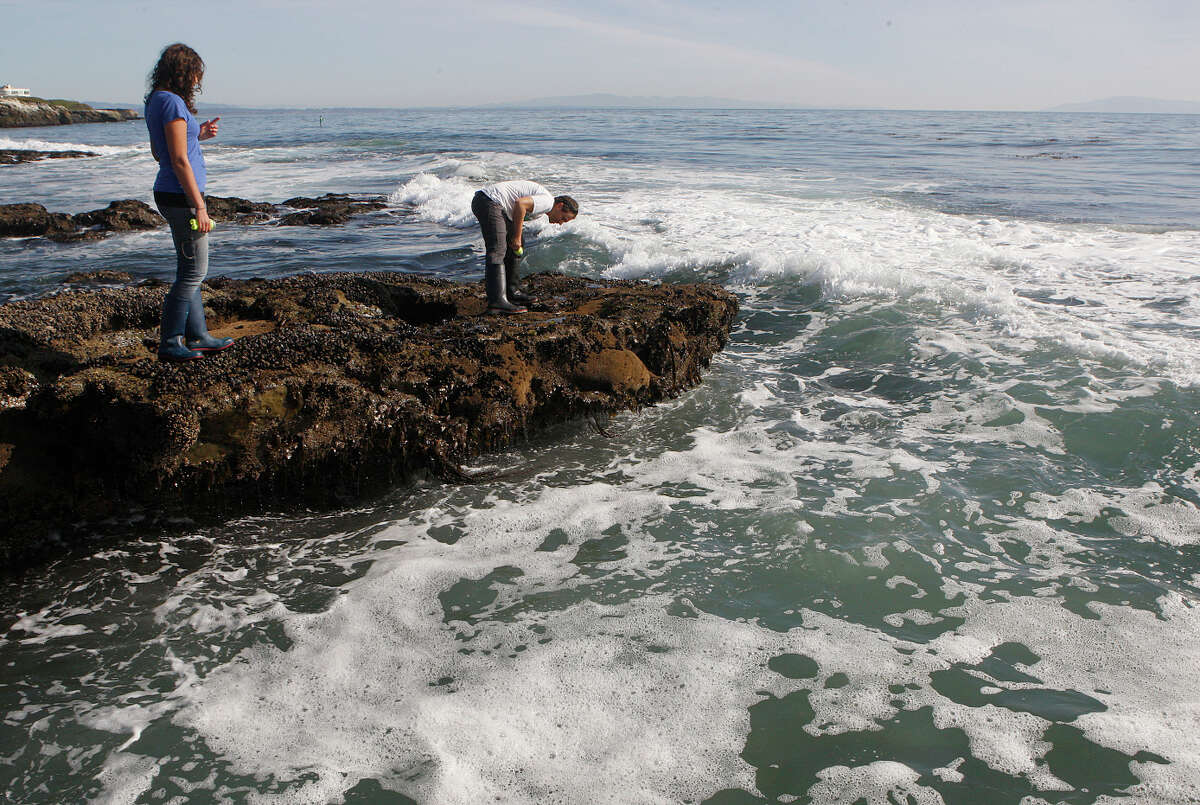 Researchers Laura Anderson (left) and Nate Fletcher with the UC Santa Cruz Long Marine Laboratory look for starfish at Natural Bridges State Park in Santa Cruz.
