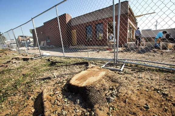 Stumps of six large live oaks near a Wendy's at North and Kirby are worth $300,000 to the city.
