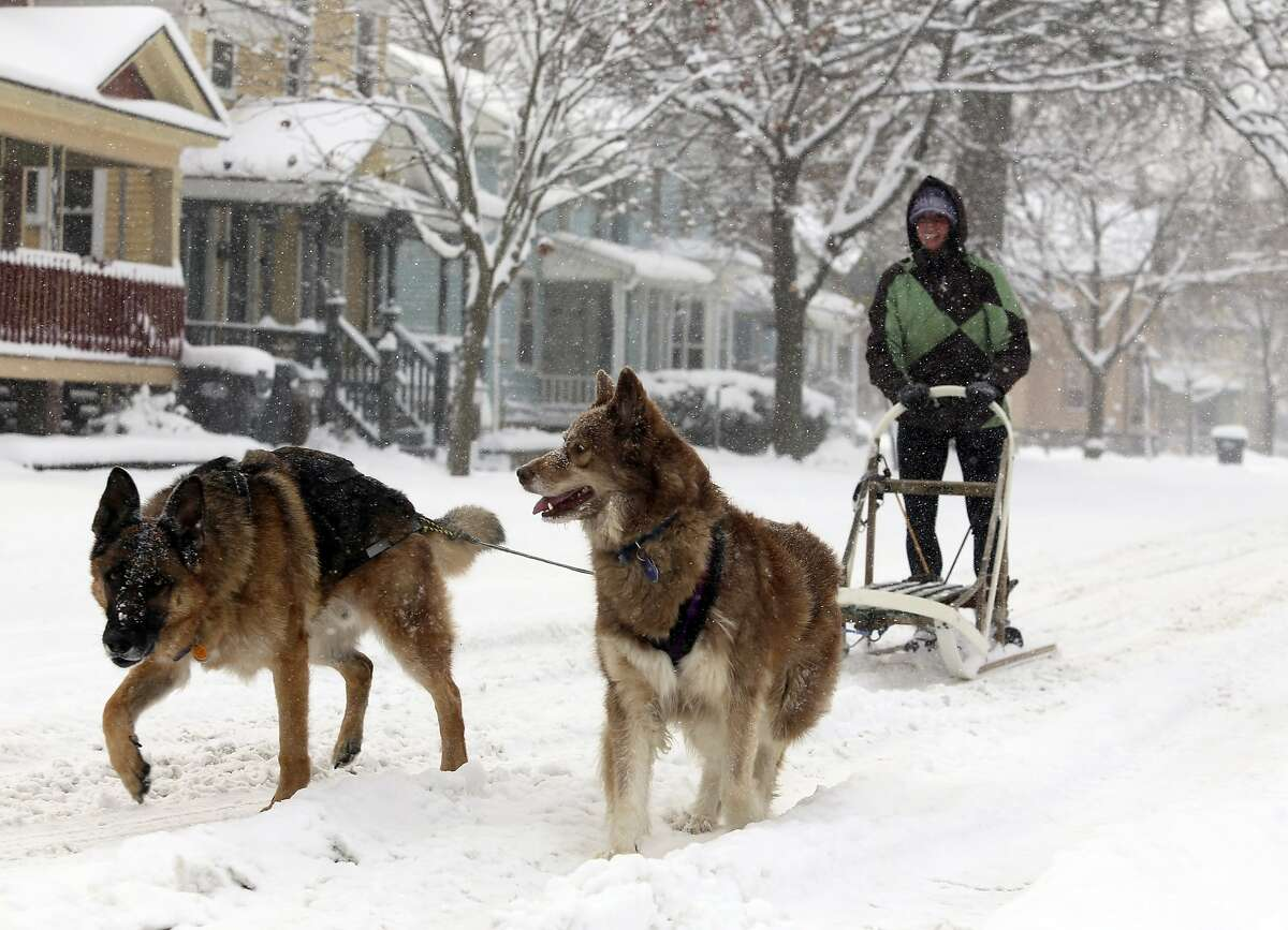 MIDWEST MUSH: Rachel Miller takes her dogs Aja and Ivan for sled ride in wintry Kalamazoo, Mich., where up to a foot of snow fell.
