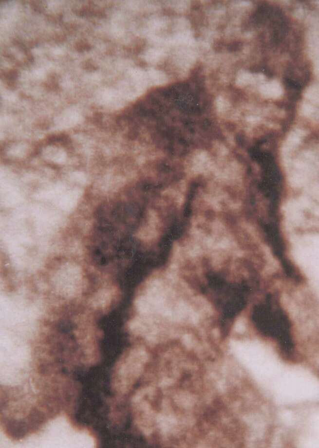 From the strange to the unbelievable, click through for a look at some of the strangest images of Bigfoot ever captured. Photo: Sasquatch Research Project/Roger Patterson And Bob Gimlin, Associated Press / SASQUATCH RESEARCH PROJECT