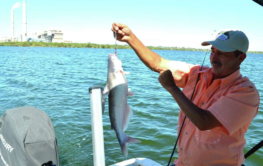 Leo Saenz holds up a nice, chunky blue catfish that could not resist a silver spoon trolled at the right depth and right speed during a fishing trip on Calaveras Lake.