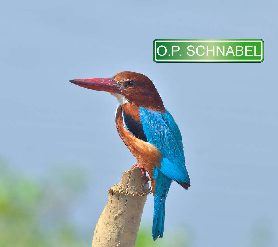 O.P. Schnabel Park is rooted in a German surname, meaning