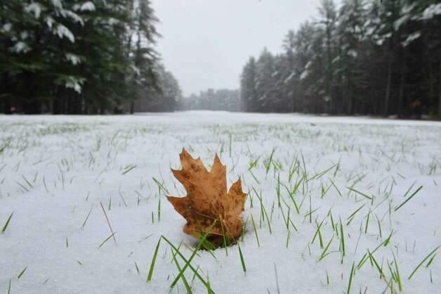 A leaf rests on grass covered in fresh snow in Saratoga Spa State Park on Monday morning, Nov. 17, 2014, in Saratoga Springs, N.Y.   (Paul Buckowski / Times Union) Photo: Paul Buckowski / 00029520A