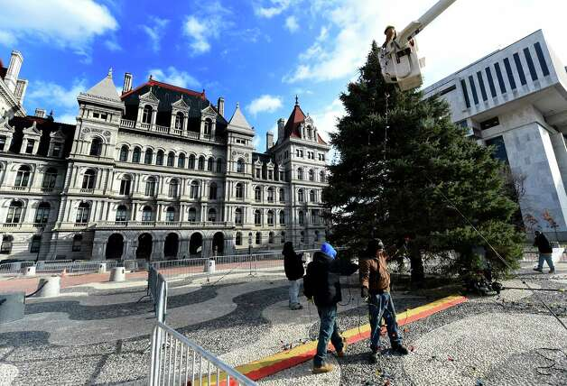 Workers from the NYS OGS-Grounds string some of the 2400 lights on the State Holiday Tree Thursday morning, Nov. 20, 2014, on the Empire State Plaza in Albany, N.Y. The lights will turned on Dec. 7th at 5:15 p.m. during a special event. (Skip Dickstein/Times Union) Photo: SKIP DICKSTEIN