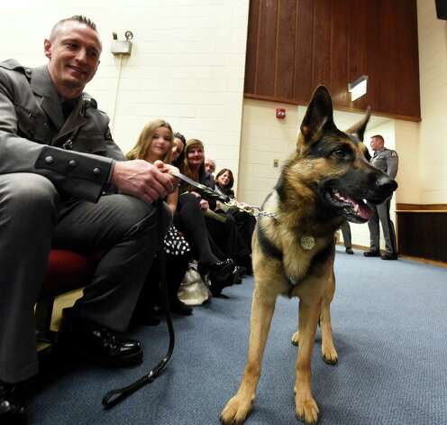 Canine Hurley looks around for some attention at the New York State Police Canine Handler Team Basic School Graduation ceremony Thursday afternoon, Nov. 20, 2014, at the State Police Academy in Albany, N.Y.  His handler, Anthony Santoro, will be stationed at SP Wilton. He was one of 14 new canine teams that received diplomas during the ceremony. (Skip Dickstein/Times Union) Photo: SKIP DICKSTEIN / 00029560A