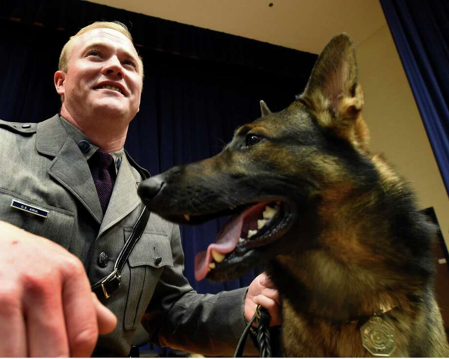Canine Frey watches the crowd at the New York State Police Canine Handler Team Basic School Graduation ceremony Thursday afternoon, Nov. 20, 2014, at the State Police Academy in Albany, N.Y.  His handler Casey Krul will be stationed at SP Northway. He was one of 14 new canine teams that received diplomas during the ceremony.  (Skip Dickstein/Times Union) Photo: SKIP DICKSTEIN / 00029560A