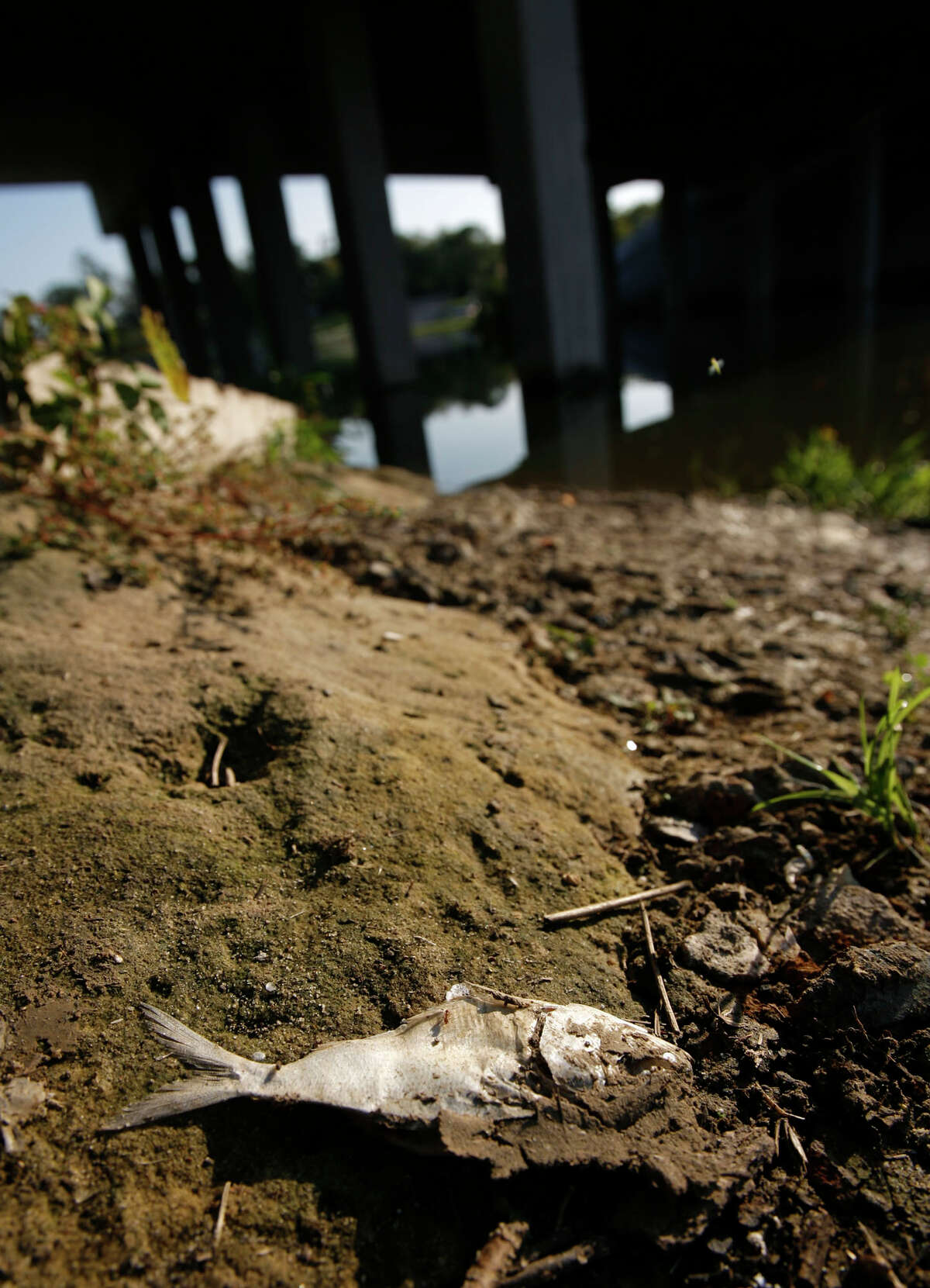 A dead fish is seen near the Market Street Road bridge over the San Jacinto River, which runs over the San Jacinto waste pit, on Thursday, Nov. 12, 2009, in Channelview. The 20-acre site contains toxic water as it was put on the Superfund list for the nation's most polluted places by the EPA. ( Julio Cortez / Chronicle )