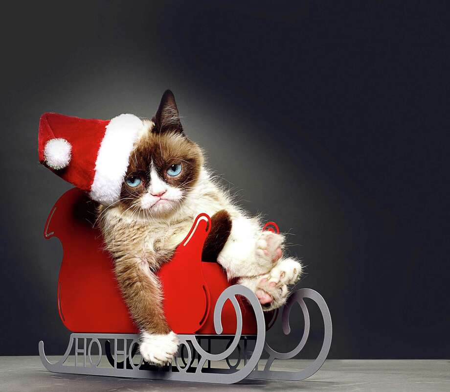 """Grumpy Cat's Worst Christmas Ever"" (7 p.m. Nov. 29, Lifetime): Grumpy Cat, aka Tardar Sauce, is a super-hot meme, the star of merchandise galore and now is the lead of her own holiday movie. If she could talk, she would tell you she doesn't much care for it, even if it is a heartwarming tale about a lonely little girl and the cantankerous kitty she befriends. Wait, Grumpy Cat can talk, and she sounds just like ""Parks & Rec"" star Aubrey Plaza. Photo: Courtesy / Lifetime"