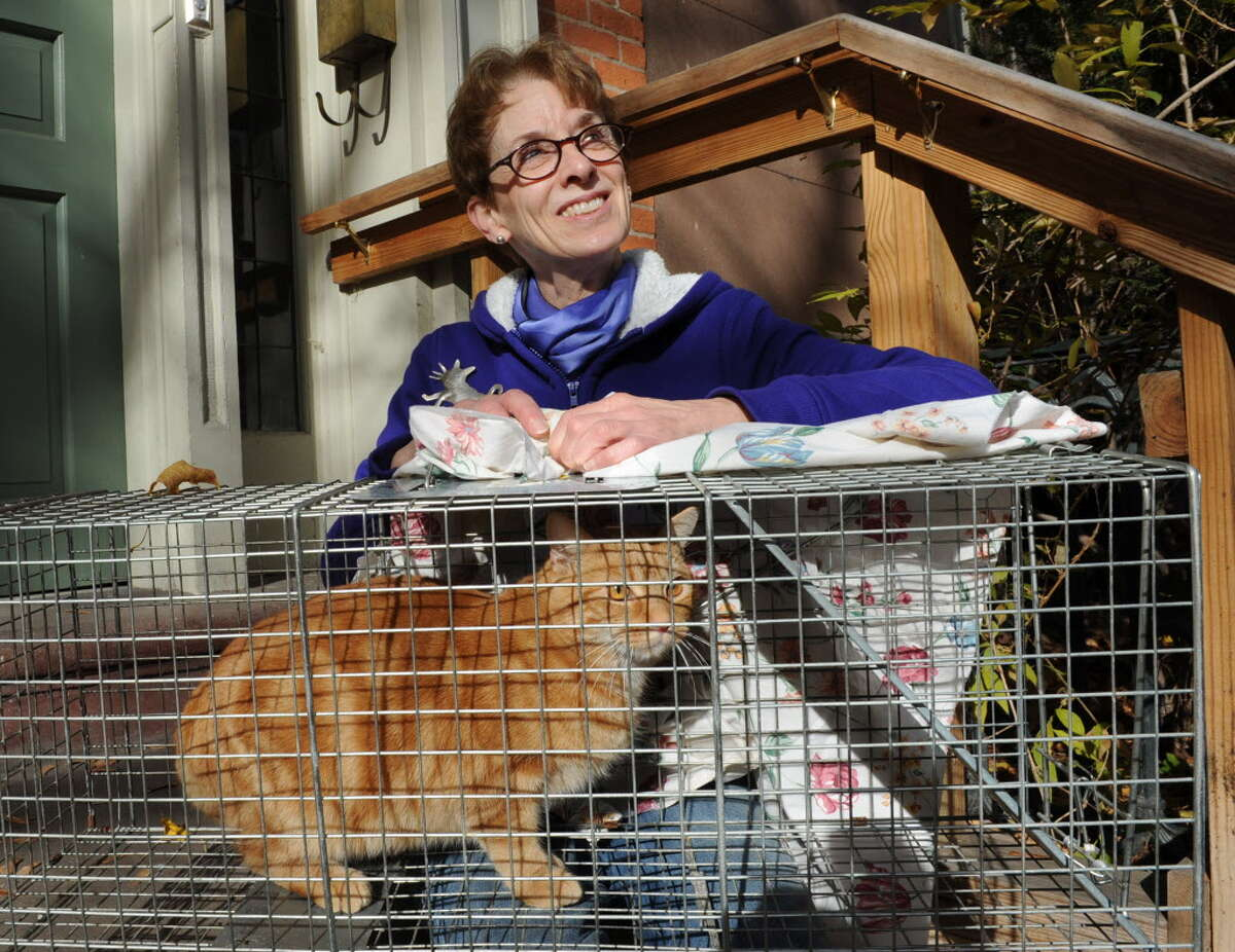 Troy City Council President and President of the Washington Park Association Lynn Kopka sits with feral cat Charlie on her front steps on Friday, Nov. 15, 2013 in Troy, N.Y. Kopka is founder of Operation Snip, an organization that neuters feral cats. (Lori Van Buren / Times Union archive)