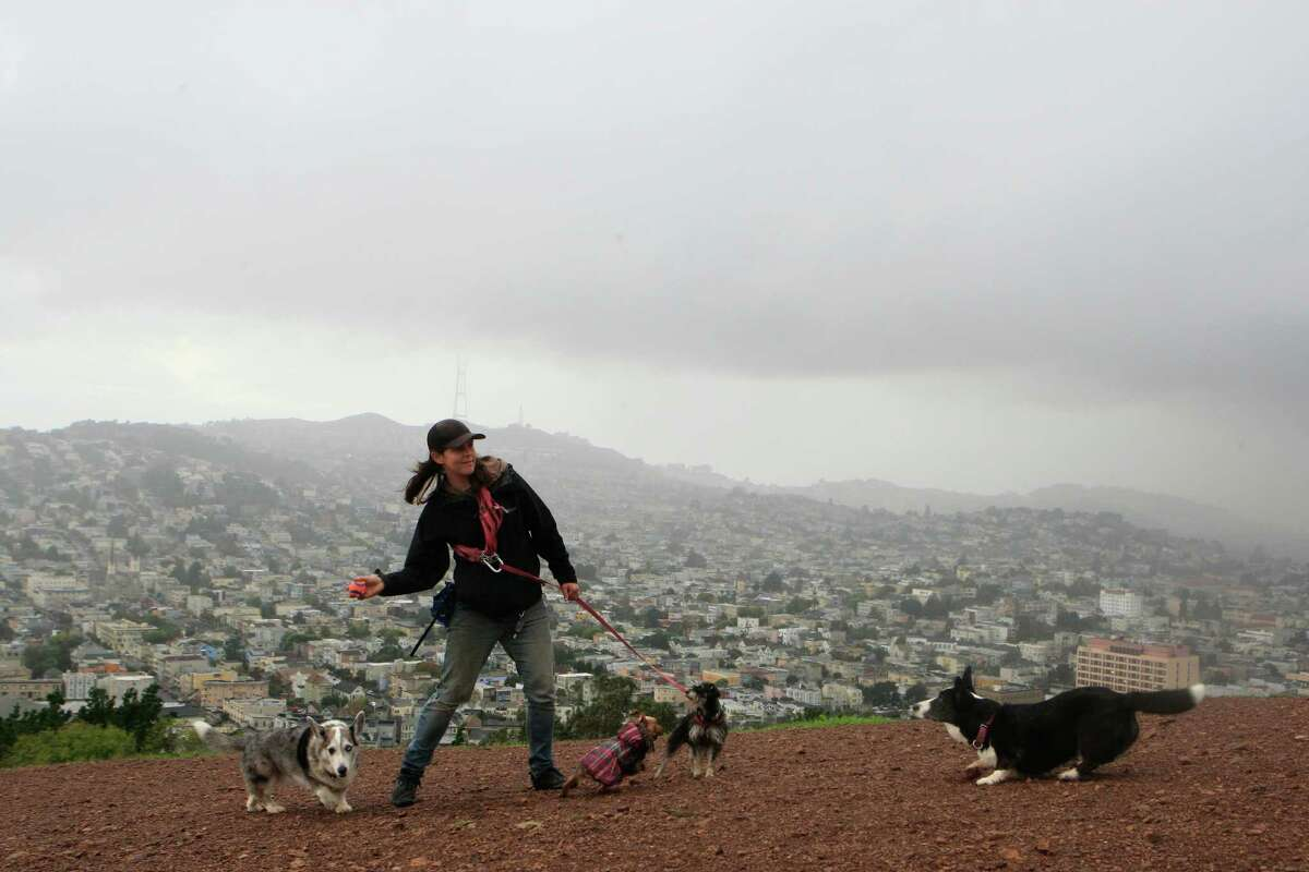 1. California Cindy Wang, a dog walker, throws a ball for the dogs at Bernal Heights park in San Francisco, Calif., on Thursday November 20, 2014.