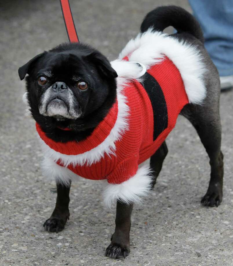 Kingwood Town Center: Kingwood Barkfest Home To Cuddly Canines