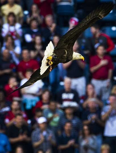 Challenger A Bald Eagle Flies Into The Stadium During