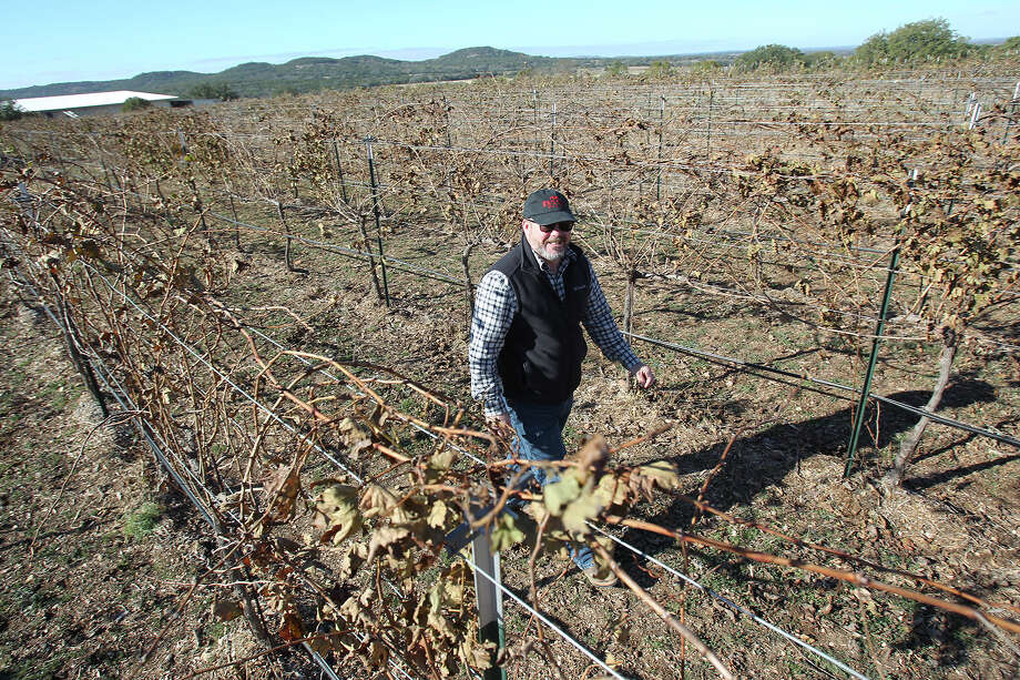 John Rivenburgh observes seasonal dormancy of plants as he walks through his Bending Branch vineyard and wine producing plant near Comfort on November 20, 2014. The facility has experienced only mild effects from herbicides used in nearby farming operations. Photo: TOM REEL