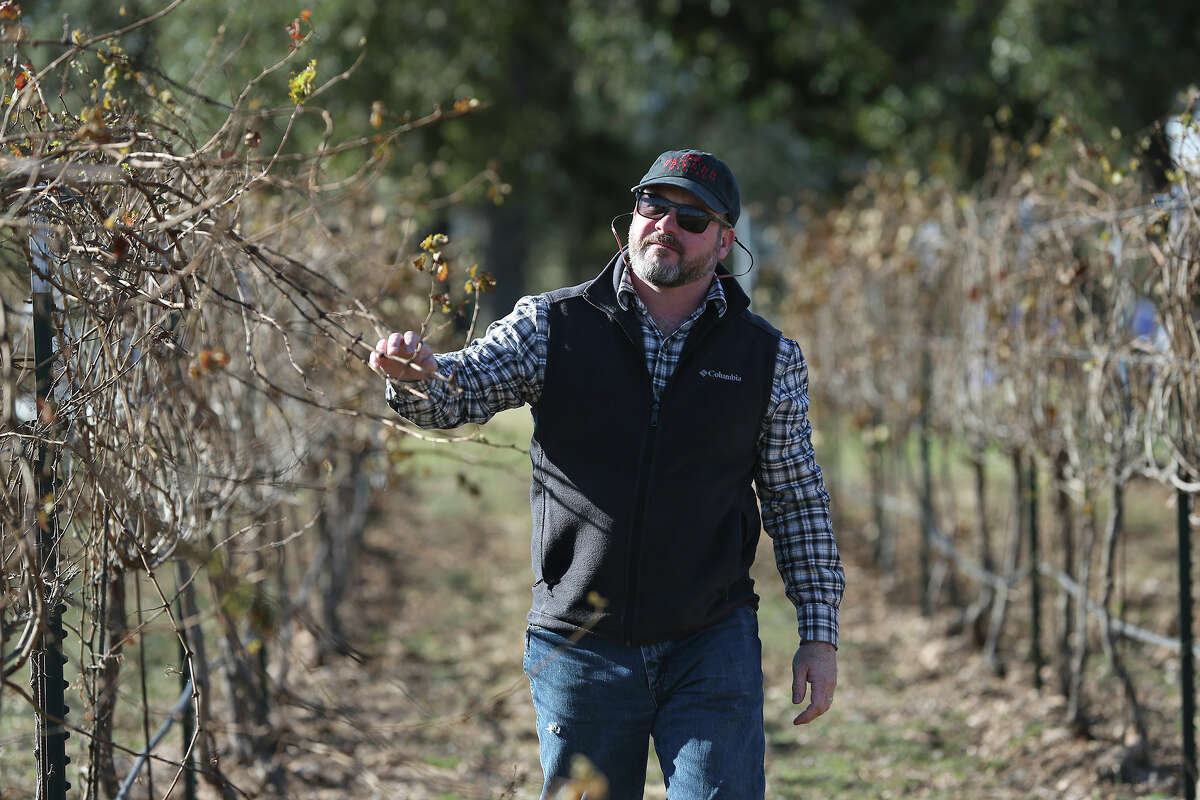 John Rivenburgh says insecticides from neighboring farms had scant impact on his Comfort-area vineyard.