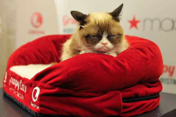 The Internet Cat Video Festival is coming to San Francisco