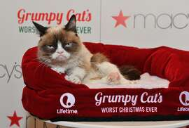 Grumpy Cat appears at Lifetime's Grumpy Cat's Worst Christmas Ever event at Macy's Union Square on November 21, 2014 in San Francisco, California.