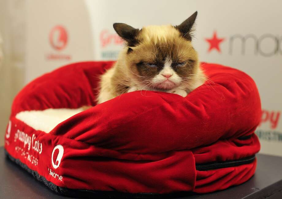 Grumpy Cat waits for the fans in line for posed photos at Lifetime's Grumpy Cat's Worst Christmas Ever event at Macy's Union Square on November 21, 2014 in San Francisco, California. Photo: Steve Jennings, Getty Images For Civic Entertain