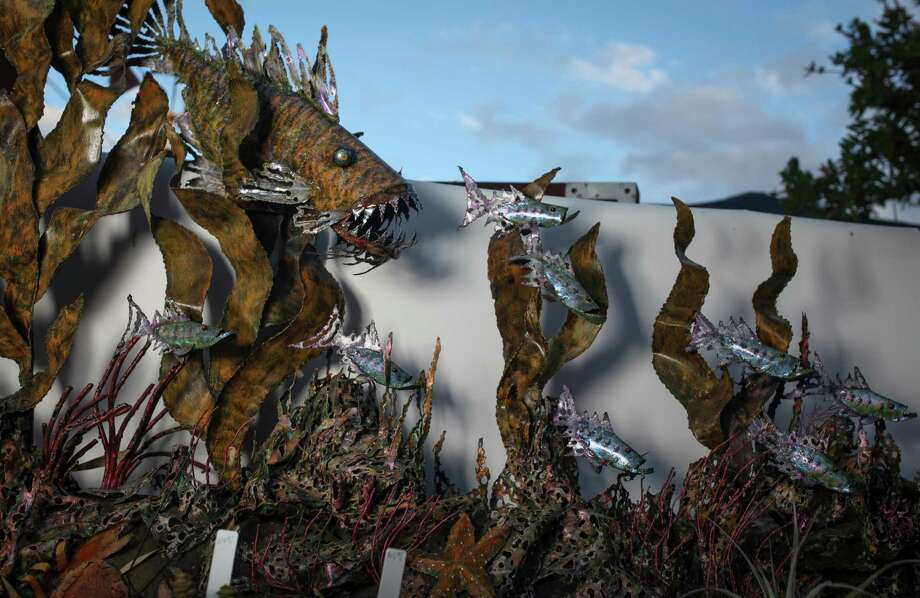 Some Mike Garnero's scrap metal fish pieces have a menacing look with gaping mouth and jagged teeth. Photo: Sam Wolson / Special To The Chronicle / ONLINE_YES