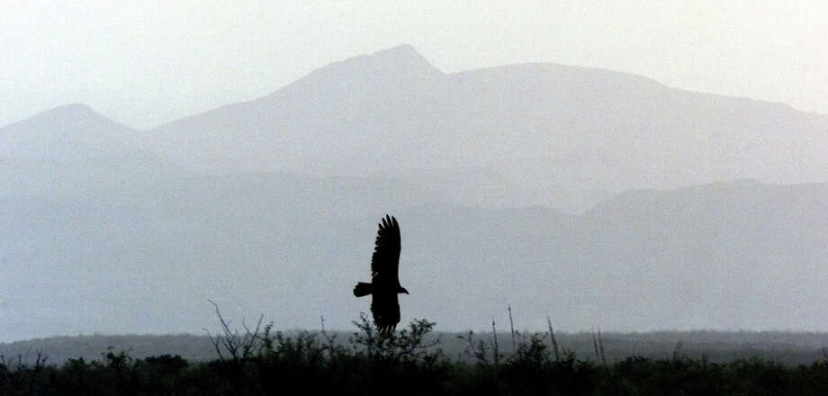 A turkey buzzard swoops in front of haze-distorted mountains at Big Bend National Park, Texas, Thursday, Sept. 2, 1999. The once-pristine park, 300 miles from El Paso, the nearest major city, and so remote that not a single FM radio station comes in clearly - today is as smoggy as some urban areas. (AP Photo/Eric Gay) Photo: ERIC GAY, Associated Press / AP