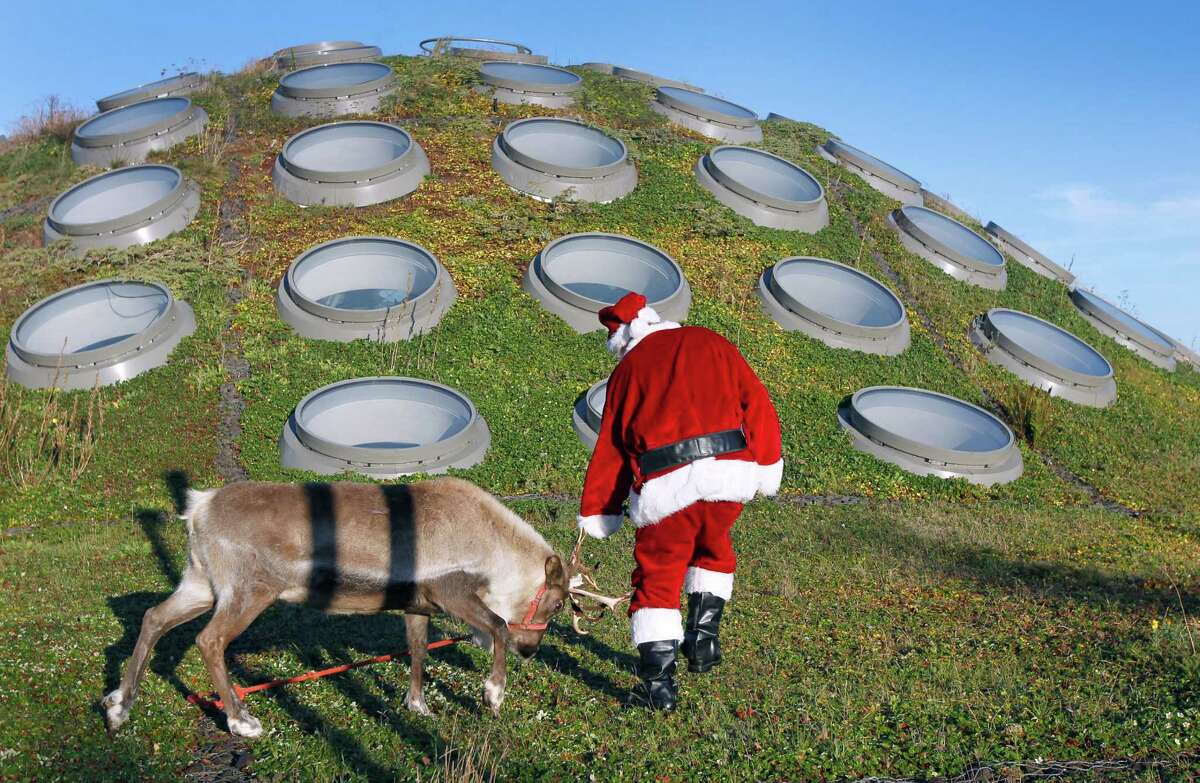 Santa Claus, who in real life is herpetology collections manager Jens Vindum, backs away from Willow, a frisky reindeer grazing on the Living Roof of the California Academy of Sciences in San Francisco, Calif. on Tuesday, Nov. 25, 2014. A pair of reindeer, Yukon and Willow, will reside in the East Garden during the Academy's annual 'Tis the Season for Science exhibit during the winter holiday season through Jan. 4.