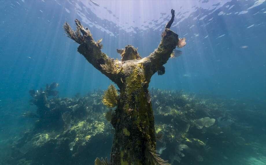 Christ of the Abyss, Florida Keys Photo: Fechter,  Joshua I, Google Views