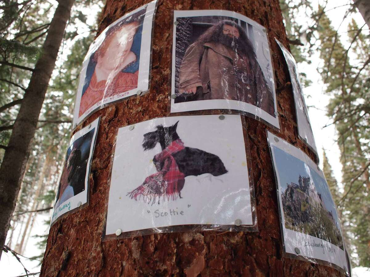Photos are tacked on trees at the Scottish shrine on Colorado's Aspen Mountain.