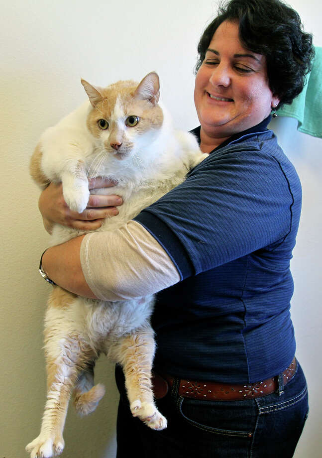 Adoption supervisor Bethany Colonnese of Animal Care Services cares for a 30.9 pound cat named Butterball at their facilities on HWY 151 on November 26, 2014. Photo: TOM REEL