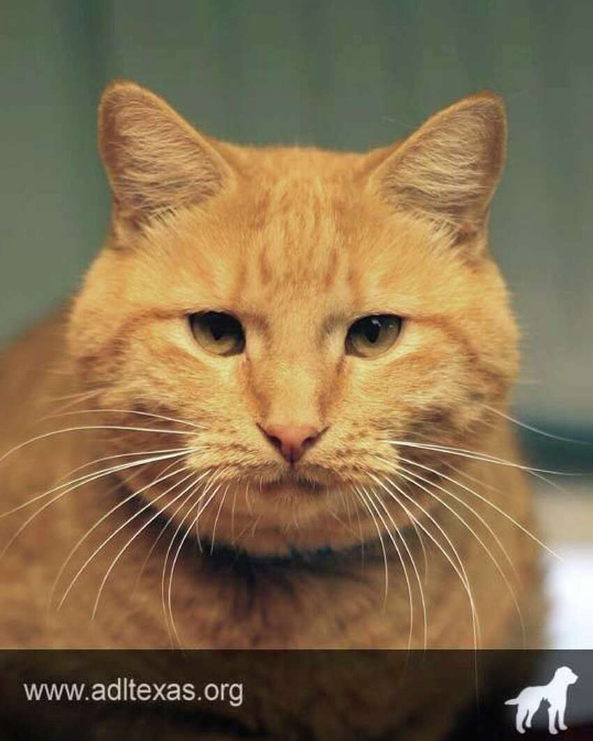 Bruno: I'm a very sweet, affectionate fellow who will greet you at the door when you come home! I enjoy being petted and I promise I'll bring all the love and happiness I can into your family!