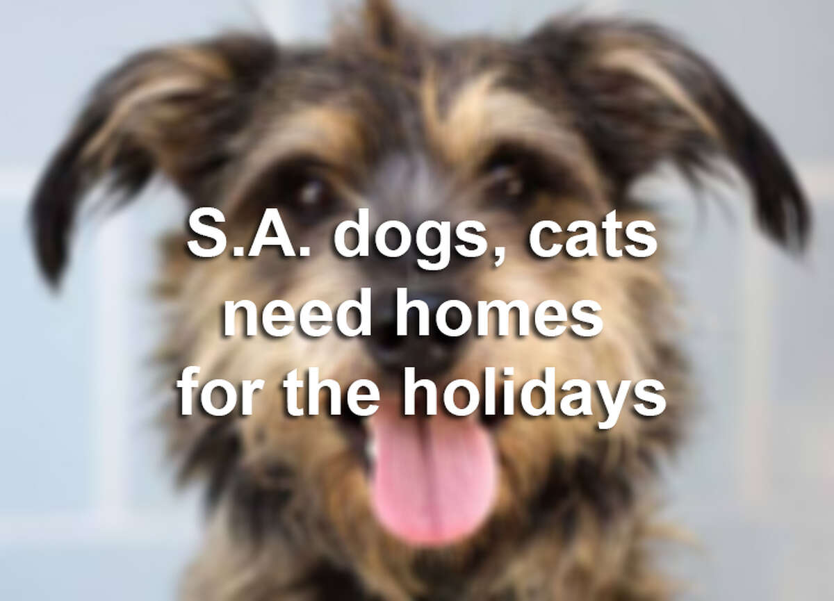 If it's the right time to add a furry friend to your family, there are plenty of dogs and cats available for adoption at animals shelters across San Antonio. The following pets are listed at the Animal Defense League of San Antonio and may be adopted any time.
